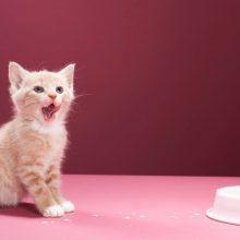 Чем кормить котенка в два месяца?