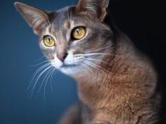 Беременная кошка: всё, что ты хотела знать