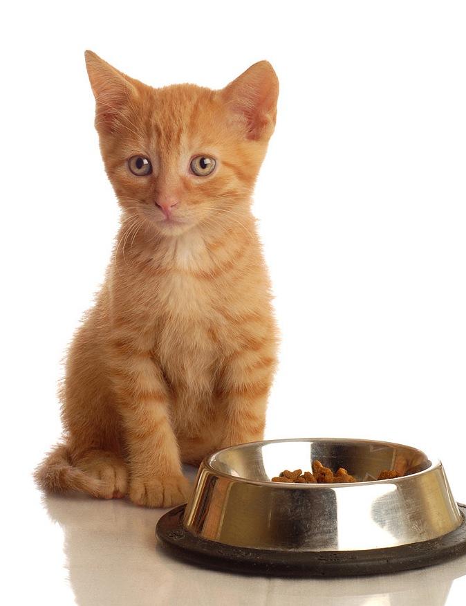 чем кормить котенка 2 месяца