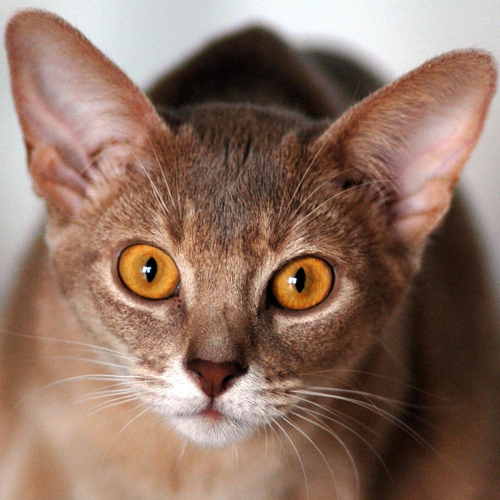 colitis in cats symptoms