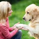 как выдрессировать взрослую собаку