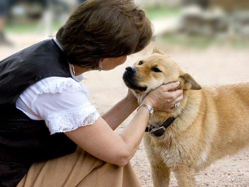 Чтобы выдрессировать собаку в возрасте, нужны терпение и ласка!