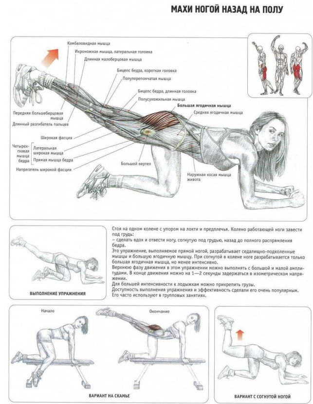 эффективные для ягодиц упражнения