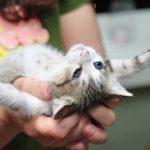 котенка держат на ладонях