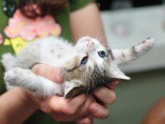 Нашла грыжу на животе у котенка— что делать?