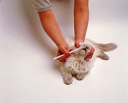 Можно ли чистить зубы коту зубной пастой