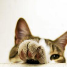 Как избавиться от запаха кошки в доме?