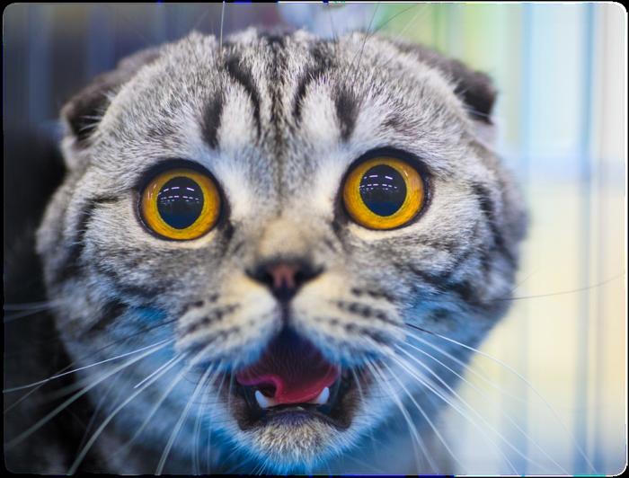 как отучить кошку лазить