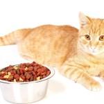 как отучить кошку от корма, как отучить кота от корма