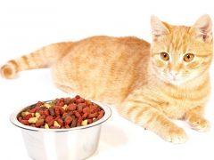 Как отучить кота, кошку от сухого корма?