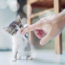 Как отучить котенка кусаться?