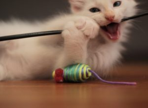 как отучить маленького котенка кусатся популярностью пользуются
