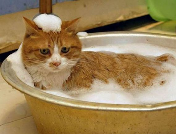 Как помыть кошку
