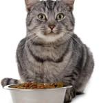 какой корм лучше для кошки