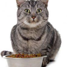 Какой корм лучше для кошек?