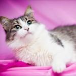 стериизованная кошка
