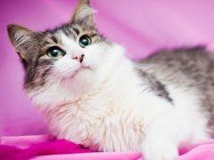 Стерилизованная кошка: как за ней ухаживать?