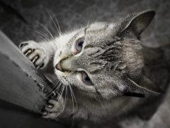 Кошка дерет обои: что делать?