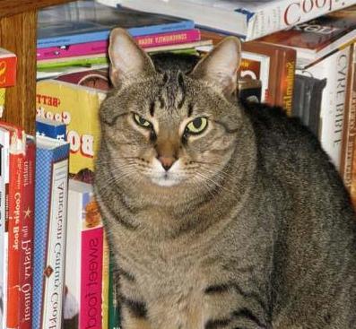 Почему у кота заплывает глаз