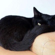 Как узнать, здорова ли кошка