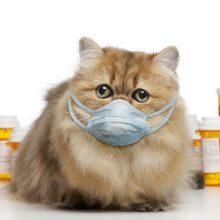 Кошка чихает, текут сопли  — чем лечить?