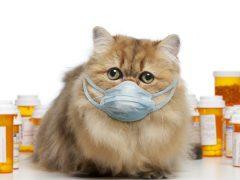 Кошка чихает, текут сопли— чем лечить?