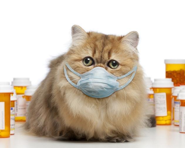 Насморк у кошки лечение в домашних условиях