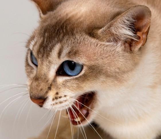 кошка съела котят