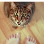 кошка мяукает без причины