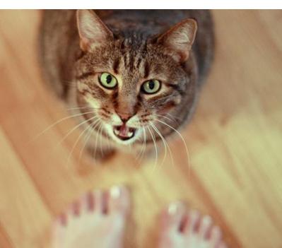 Коту один год мяукает