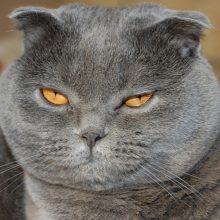 Умеют ли кошки ревновать?