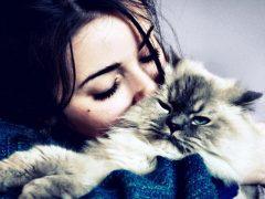 Существуют ли лечебные кошки?