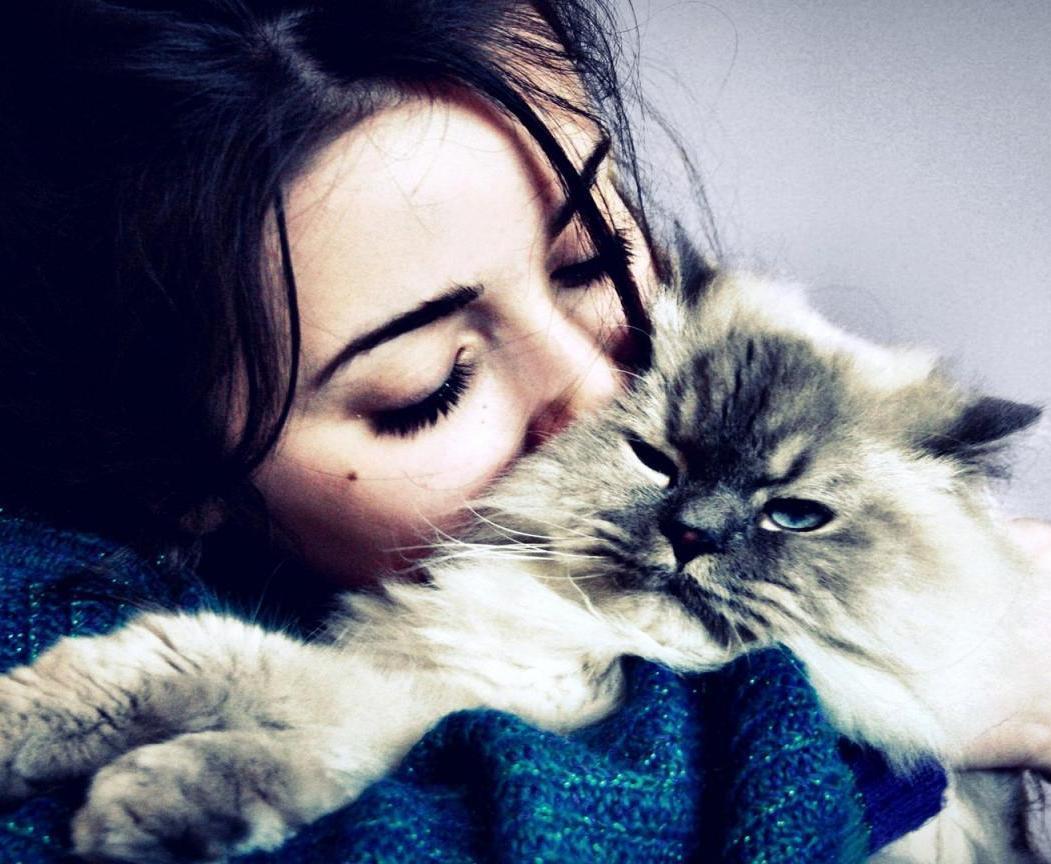 лечебные кошки
