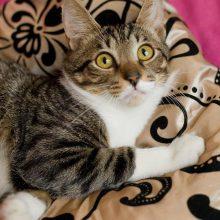 Ложная беременность у кошек: что это такое?