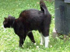 Что делать, если кот метит в квартире, как отучить?