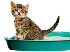 Как побыстрее научить котенка ходить в лоток?