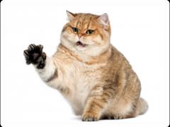 Как отучить кошку драть мебель?