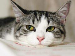 Пищевая аллергия у кошек на корм и еду: что делать?