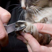 Как правильно подстричь когти коту и кошке?