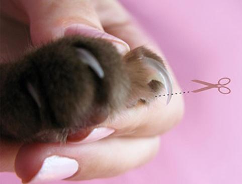 лапка кошки с когтем