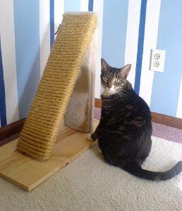 кошка сидит возле когтеточки