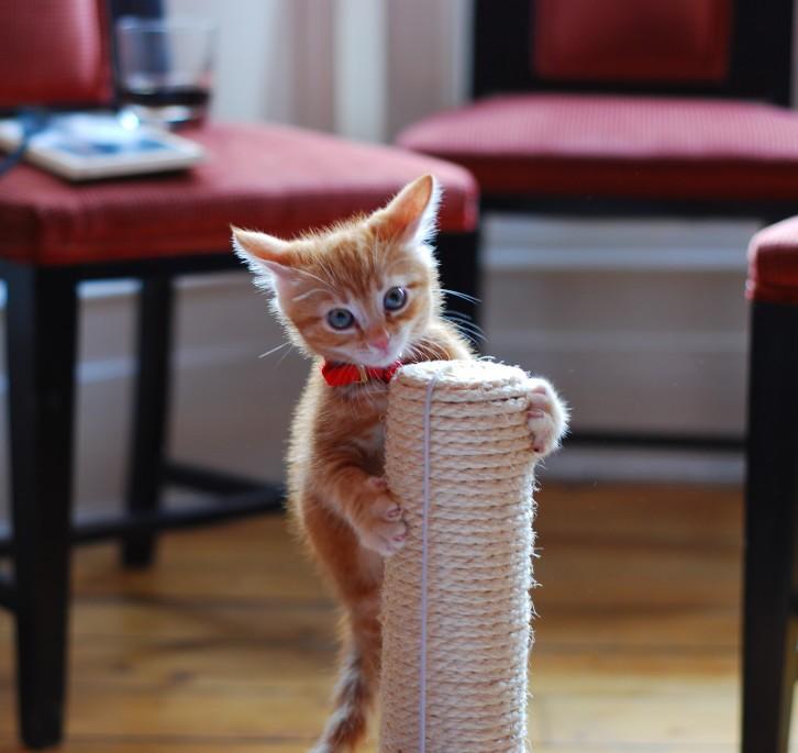 котенок залез на когтеточку
