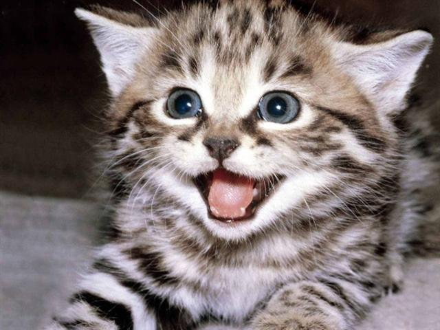 приучить котенка к лотку