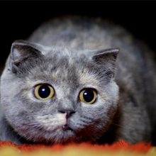 Признаки глистов у кошек и лекарства от них