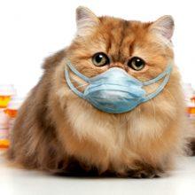 Лечение простуды у кошек: что делать, если простыла кошка?
