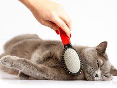 Как и чем правильно расчесывать кошку?