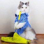 кот моет пол шваброй