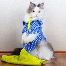 Лучшие средства от запаха кошачьей мочи
