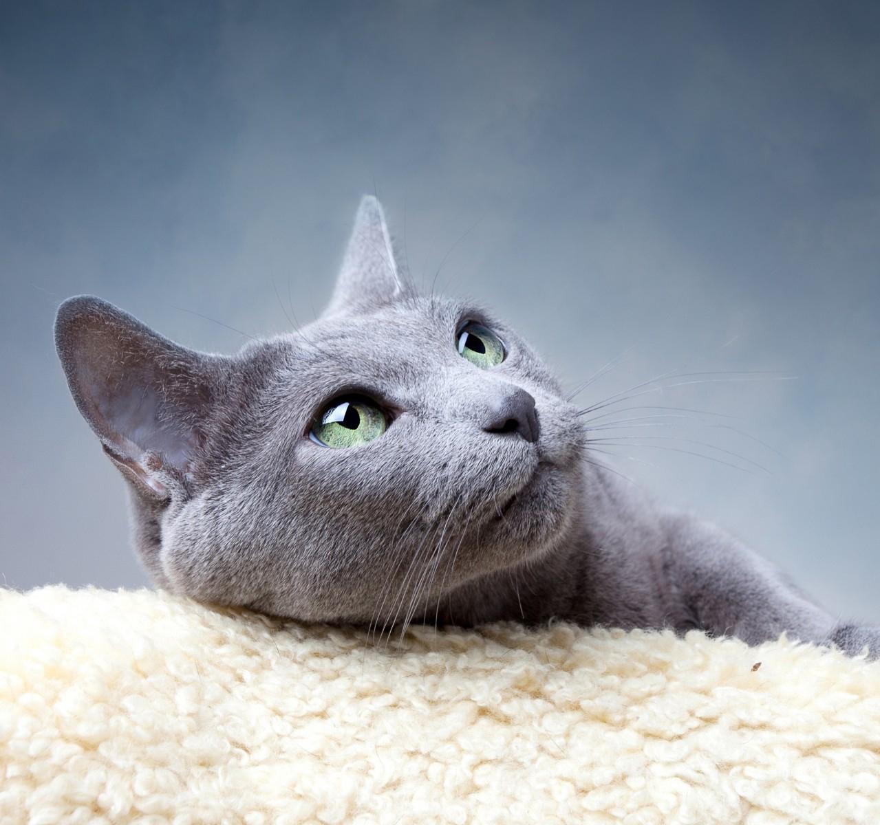 стерилизовать ли кошку