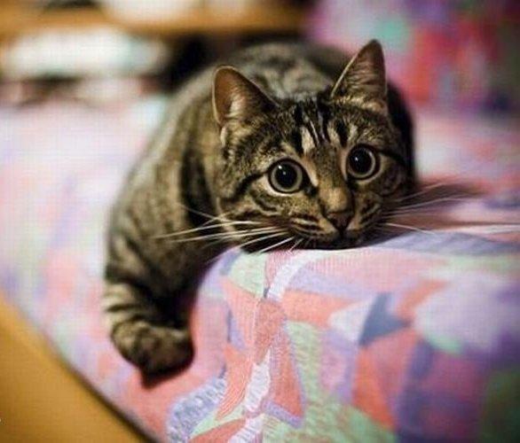 у кошки течка что делать
